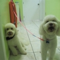 Pet Avenue Grooming and Boarding - Miami, FL