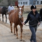 Wheaton Park Stables - Silver Spring, MD