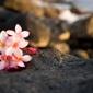 Serenity and Massage - Honolulu, HI