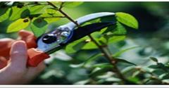 Copp Tree Company - Acton, MA