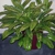 Intergreen Foliage Inc
