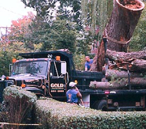 Boston  Tree Company - Needham, MA