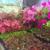 Growing Seasons Nursery Inc.