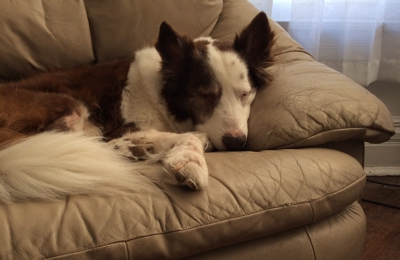 Millwood Animal Hospital & Equine Clinic - Springfield, MO. Buckey, in his favorite chair ����