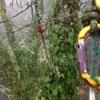GreenTree Arborists