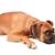 Aristopets Dog Walking & Pet Sitting