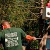 Joe's Complete Tree Service