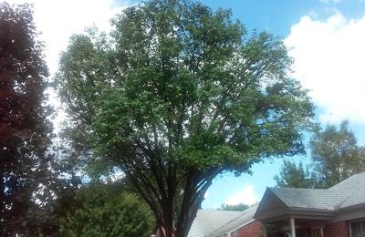 Amezola Tree Service - Detroit, MI