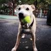 Swifto Dog Walking Flatiron District