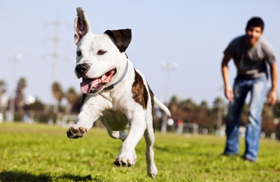 Max 200 Performance Dog Equipment Inc - Port Byron, NY