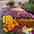 All Seasons Flowers and Produce