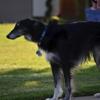 Angelic Canines Dog Training