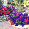 Goodman's Landscaping and Maintenance