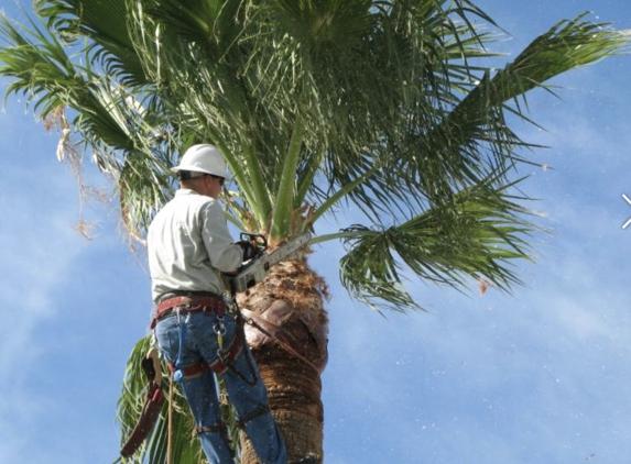 Adolfo Tree Service - Houston, TX. Palm trimming in Houston Texas