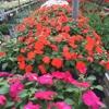 Sue's Flower & Garden Center
