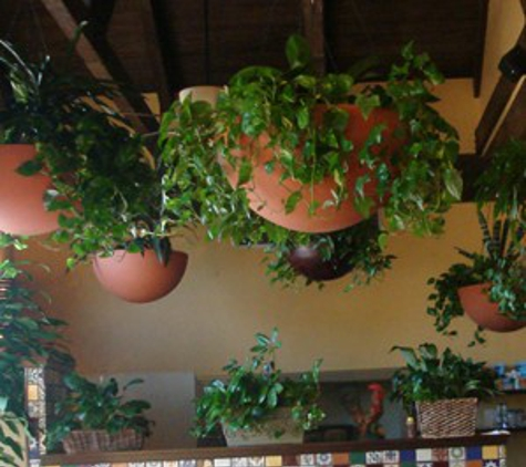 Los Verdes Interior Gardens - San Antonio, TX