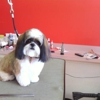 Pampered Pups Pet Grooming