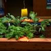 Lovie's Garden Supply