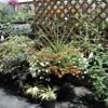 London Florist Greenhouses & Garden Center