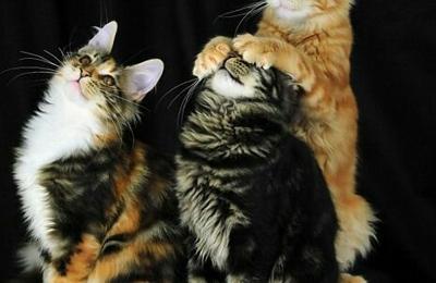 Forsyth County Animal Control - Winston Salem, NC. Kitty
