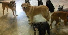 Canine & Company Inc - Depew, NY