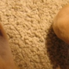 Kat's Kleen-Up Carpet & Upholstery Cleaning