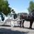 Box Elder Horse & Carriage