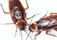 Drewery's Termite & Pest Control LLC - Oxford, MS