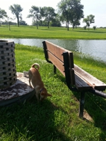 """The """"parking"""" bench at the pond."""
