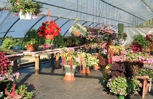 We have beautiful hanging baskets