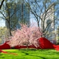 Madison Square Park Conservancy - New York, NY