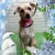 Little Shop Of Howlers Dog Grooming, LLC