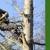 Camacho's Tree Service