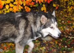 Animal Daycare & Boarding - Anchorage, AK