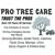 Pro Tree Care - Linda Johns
