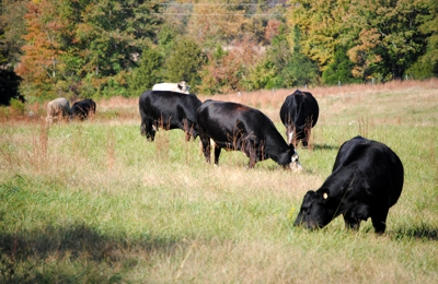 Lazy Creek Farms - Beaverdam, VA