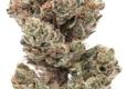 The Lodge Cannabis - Denver, CO