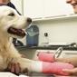 Powers Drive Animal Hospital - Orlando, FL. AAHA Accredited