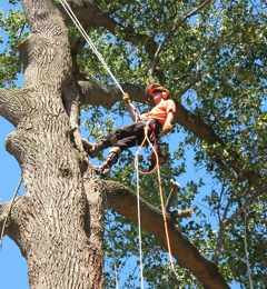 Ace Tree Surgery Inc - Marietta, GA