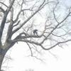 Collins Handyman and Tree Service