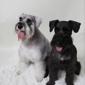 Trim Time Pet Grooming - Mesa, AZ