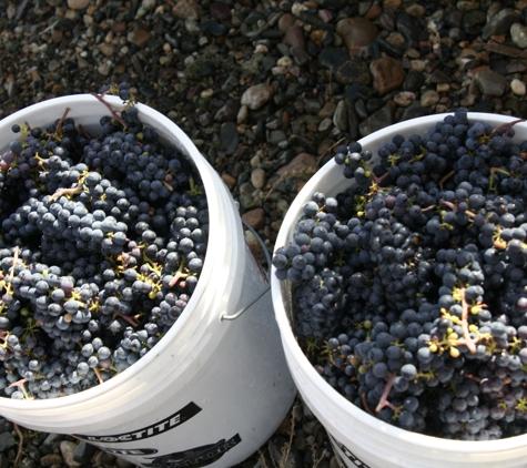 Grape House Vineyards - Colbert, WA