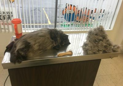 Hampshire Animal Hospital 150 S Marsham St, Romney, WV 26757