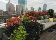 Foliaire - Boston, MA