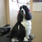 Clipper Ship Pet Grooming & Boarding - Lake Mary, FL