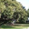 Averill Park