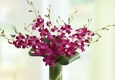 David's Flowers Gifts & Interiors - Oklahoma City, OK