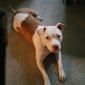 Franklin County Dog Shelter & Adoption Center - Columbus, OH