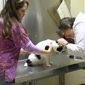 Big Creek Animal Hospital - Millington, TN