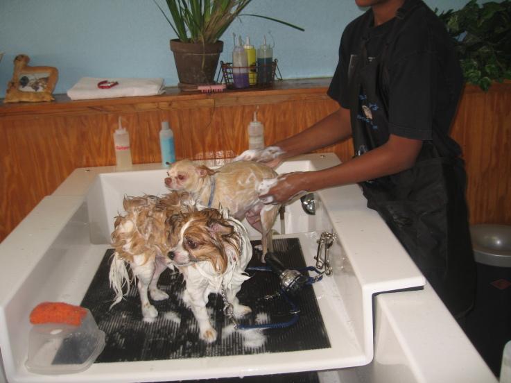 Barkleys do it yourself dog wash professional groom spa 524 barkleys do it yourself dog wash professional groom spa 524 northlake blvd north palm beach fl 33408 yp solutioingenieria Gallery